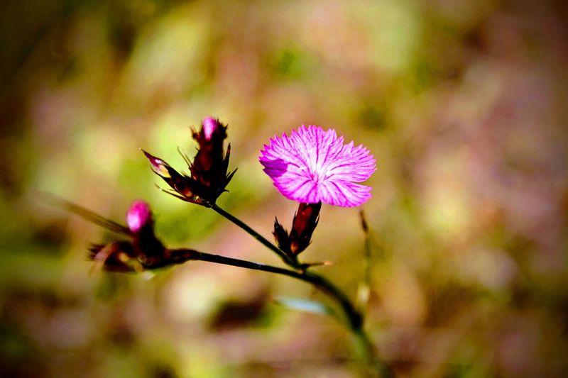 Flowers 578