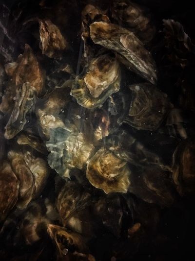 Oysters in Water Out Of The Phone Iphoneonly Fine Art Photography Food Abstract Abstract Photography SHELLFISH  Seafoods Food Photographer Food And Drink Food No People Backgrounds Indoors  Close-up Animal Nature Pattern Textured  Underwater Marine