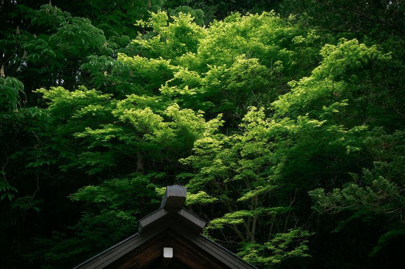 Meotogi shrine,