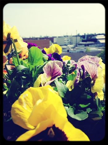 Summer Flowers Spring
