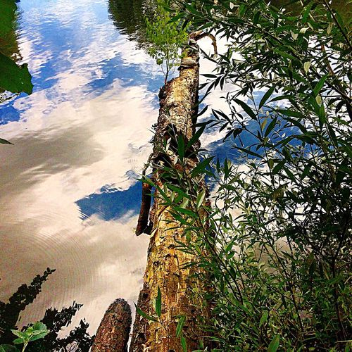 Tree Water Nature Outdoors Growth No People Day Sky Sunny Cloud Clou Water Reflections Happy Places Nofilter Perspective Personal Perspective Standing Balance Balancing Act Tranquility Tranquil Scene Beauty In Nature EyeEm Nature Lover EyeEm Best Shots