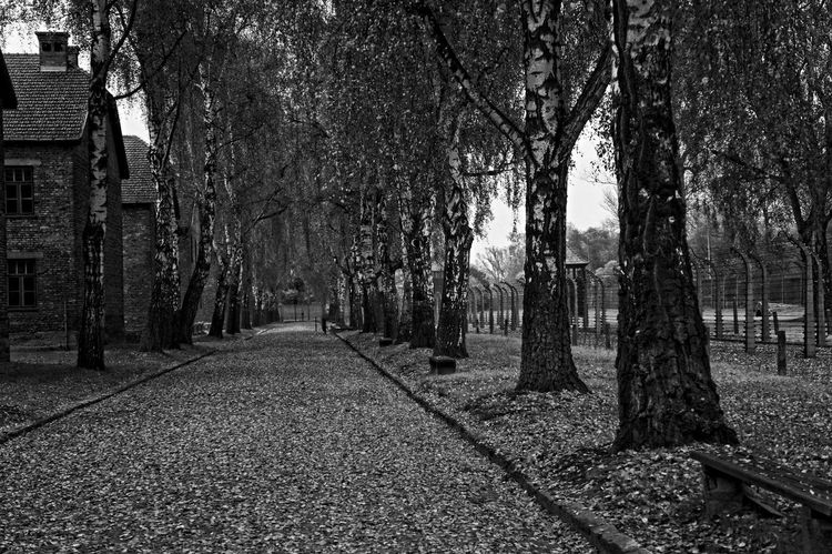 Auschwitz  Blackandwhite Composition Concentrationcamp Day Footpath Leading Outdoors Perspective Season  Tree Tree Trunk