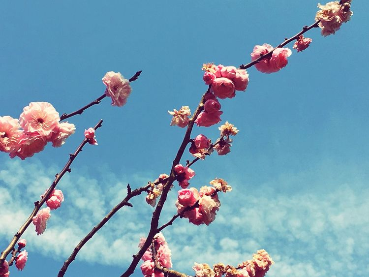 The blossoming has begun here in Tokyo. Nature Blossom Tokyo Japan Kinuta Park