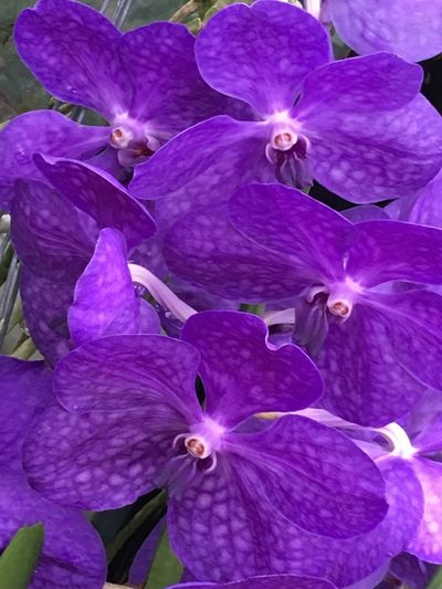 Orchid Flower Petal Purple Fragility Beauty In Nature Growth Nature Freshness Flower Head No People Close-up Plant Outdoors Day Full Frame Blooming