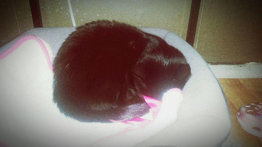 One Animal Pets Black Color Sleeping Cat Sweet Dreams Sweet Cat <3 Mogli