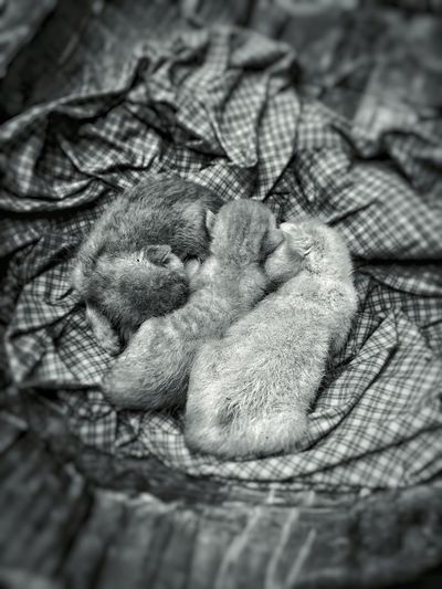 Abandoned kittens. Cat Kitten Street Streetphotography Animal PhonePhotography IPhoneography Blackandwhite