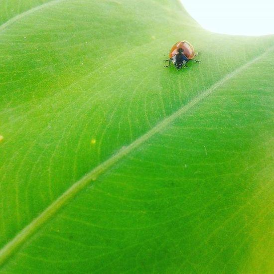 Colorful Love Nice Beautiful Instagood Trees Green Ant Qalqilya ههههه حشرات اخضر جمال العيد