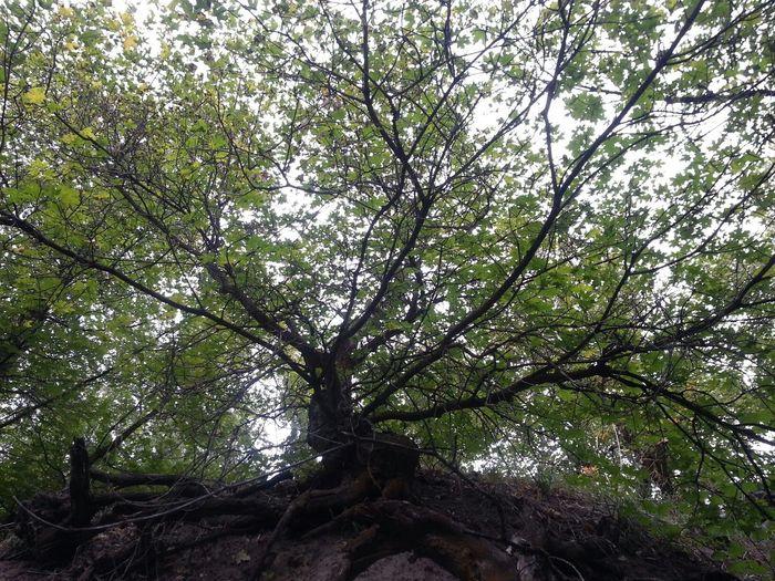 The Purist (no Edit, No Filter) TreePorn