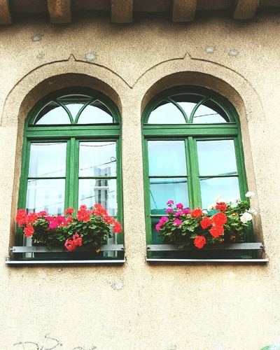 Flowers on the Window Flower Flower Building Exterior Window Box Architecture Built Structure Window Outdoors Day Fragility Plant No People Nature Freshness Growth Beauty In Nature Flower Head