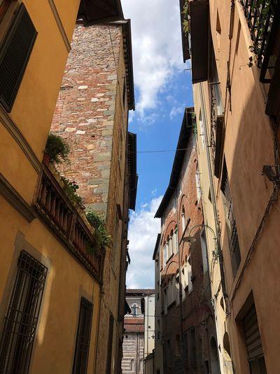 Amabile Lucca