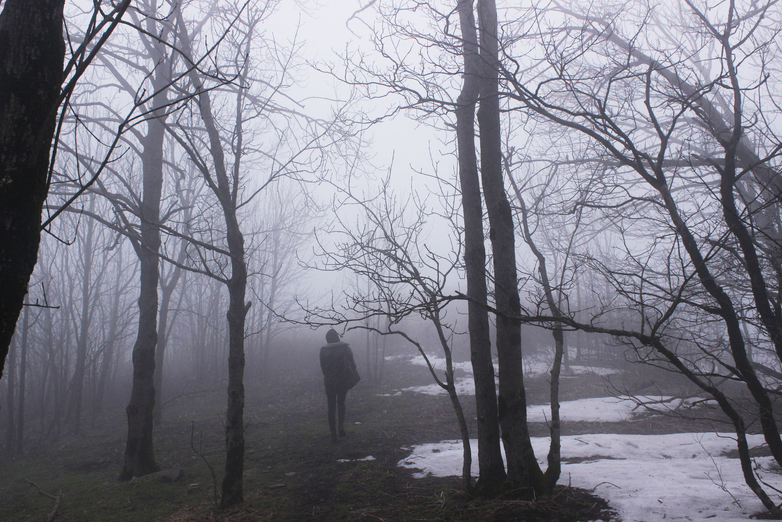 bare tree, tree, tree trunk, branch, tranquility, tranquil scene, silhouette, nature, scenics, beauty in nature, landscape, sky, non-urban scene, solitude, outdoors, full length, idyllic, remote, fog, day