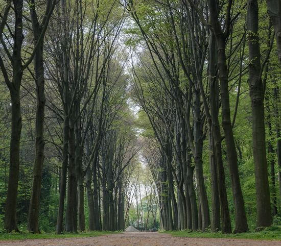 Nature Allee