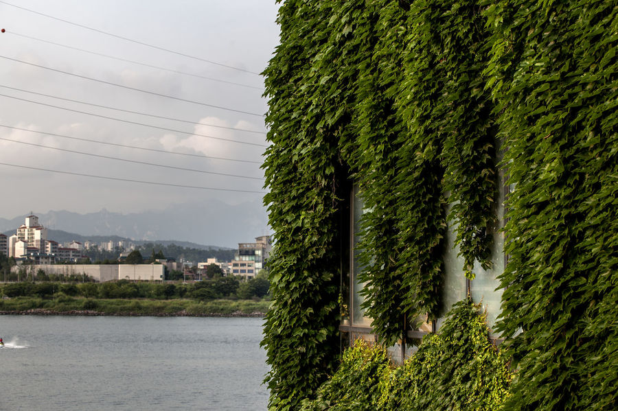Beauty In Nature Built Structure Cable Canal Day Green Growth Han River Hangang Ivy Lush Foliage Nature No People Outdoors Plant Power Line  River Riverscape Scenics Seonyudo Sky Tranquility Tree Water Window