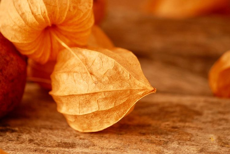 Dried leaves EyeEm Best Shots Warm Colors Food Orange Color Food And Drink Focus On Foreground Healthy Eating Freshness Close-up Plant Part Selective Focus Leaf No People Table Fruit Organic Dry Still Life EyeEmNewHere The Still Life Photographer - 2018 EyeEm Awards The Creative - 2018 EyeEm Awards