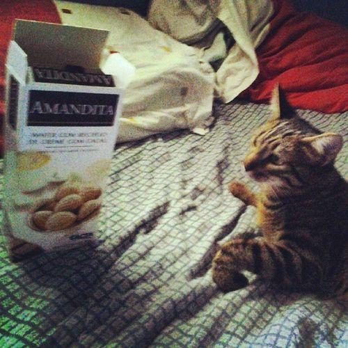 Chuva eu minha gata e Amandita
