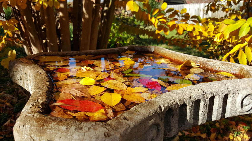 Abundance Autumn Autumn Backyard Beauty In Nature Bird Bath Change Close-up Colorful Day Daylight Fall Fall Leaves Growth Leaves In Water Multi Colored Nature No People Outdoors Sunlight Tranquility Yellow