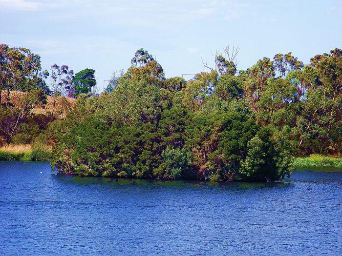 At The Park Lake Trees