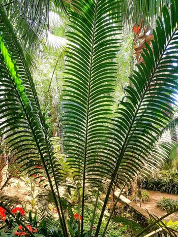 Nature Plants On The Wall No People Beauty In Nature Garden Natural Pattern Palms Leaf Close-up Plant Sky Palm Leaf Palm Frond Green Leaves