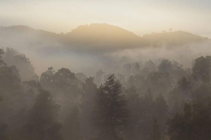 Misty mountain mornings Fog Mist Morming Nature Pinaceae Pine Woodland Valley Evergreen Tree Mountain Ridge Atmospheric Mood WoodLand