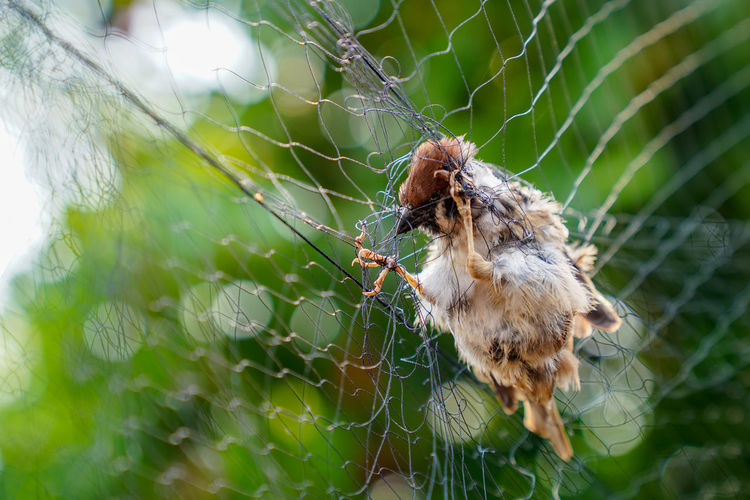 Animal Themes Animal One Animal Animal Wildlife Spider Web Animals In The Wild Focus On Foreground Invertebrate Close-up Insect Spider Arachnid Arthropod Fragility No People Day Nature Selective Focus Plant Zoology Outdoors Animal Leg Web Trapped Net