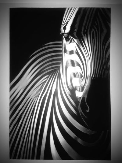 ZEBRAH Zebra