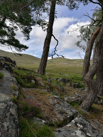 Bizarre! 😉 Nature Landscape Tree Outdoors No People Take A Look Outside The Magic Mission Scotland Beautiful Nature Beautiful Highlands Magic Highlands Scottish Highlands Glen Cannich Beauty In Nature No Filter, No Edit, Just Photography Trees And Rocks Trees Are Beautiful Trees And Nature Tranquil Scene Trees Rural Scene