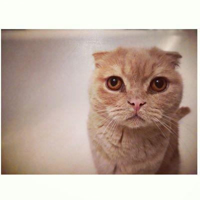 Selfie ✌ OpenEdit Photooftheday Photography Catsagram Cat Cat♡ Catsofinstagram Catoftheday Photo♡