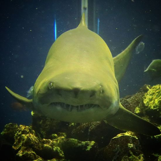 Underwater UnderSea Sea No People Space Outdoors Close-up Day Shark Attack Water 風景 サメ顔 サメ
