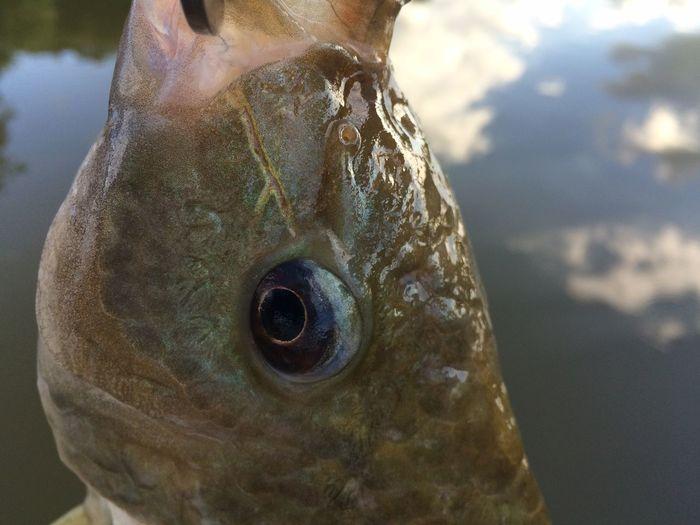 Detail shot of fish