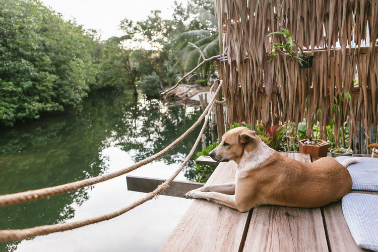 View of dog relaxing on tree by lake