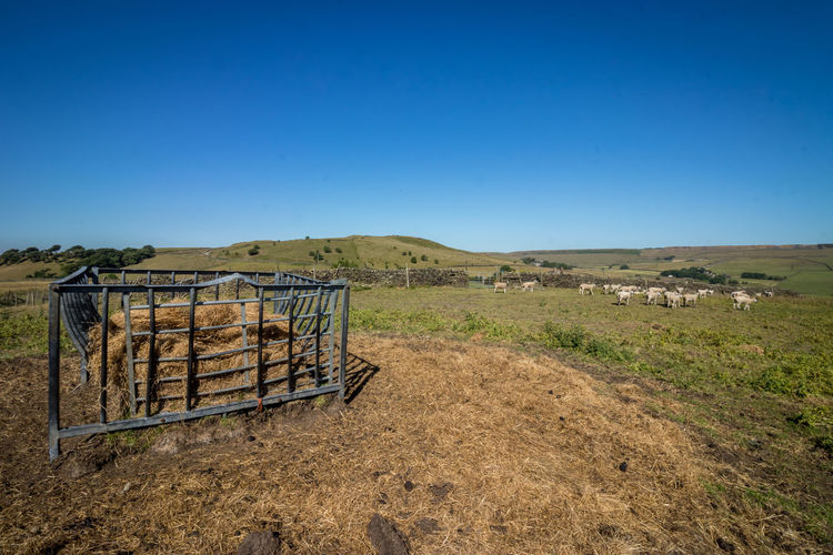 hen un the farm Whool Rural Agriculture Hen Farm Sheep Animal Themes Landscape England Grassland Clear Sky Sunny Sky Landscape Chainlink Fence
