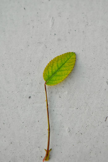High angle view of plant growing on land