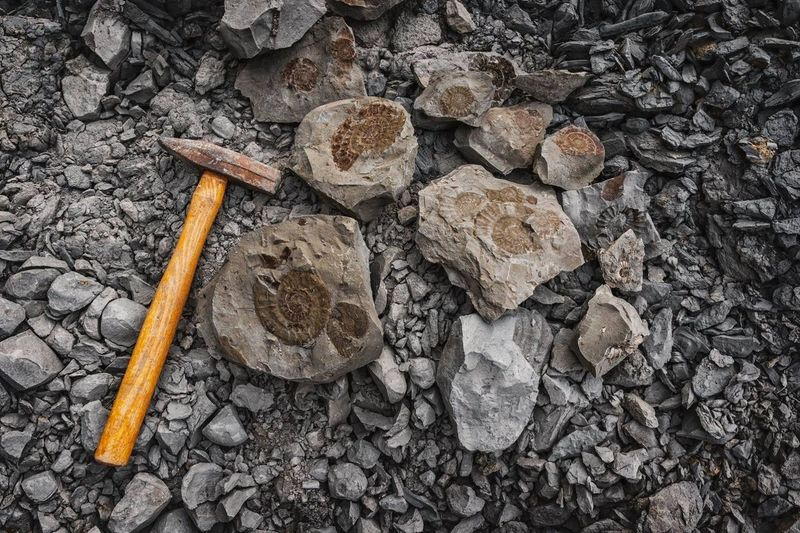 Fossil finding Ammonites  Geology Hammer Geology Fossil Hunting Solid No People High Angle View Day Nature Rock Rock - Object Land Outdoors Directly Above Textured  Stone - Object Still Life Wood - Material Field Large Group Of Objects Close-up Design Communication