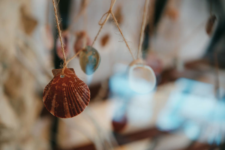 Beach natural decoration, sea shells hanging on a thread Beach Life Summer Summer Views Chilling Sandy Beach Sunny Day Woman Close-up Hanging Selective Focus Nature Decoration Decor Rustic Style Rustic Beauty Rustic Sea Shells Film Photography No People