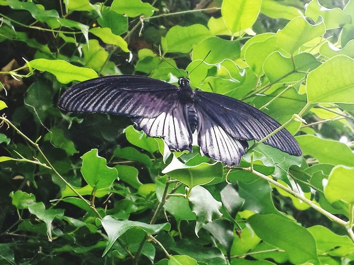 Buterfly At The River Buterfly Buterfly Of EyeEm Buterflyflowers Buterfly🌸 Buterfly Garden Buterfly 🌺🌺🌺 Buterfly On The Garden. Buterfly Fly Away ! Buterfly Blue