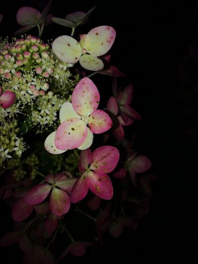 New Photo Photooftheday Photography Photographer Flowers Beautiful Pink Amazing Goodnight Happy Taking Photos Pics Likeforlike Photos Like4like Picoftheday Tagsforlikes Amazing View Art Good Times Composition Sunny Day 💞💖💘💗🌸🌷💐🌺