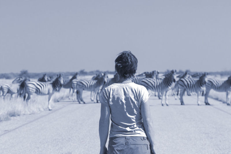 Rear view of woman standing against zebras on landscape