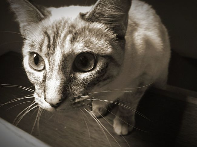 My Cat I Love My Cat Pets Blackandwhite Taking Photos Check This Out Beautiful