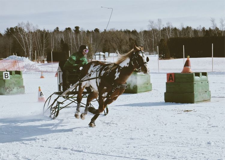 Horse Horses Horseriding Working Animal Horse Racing Horseback Riding Animal Themes Day Snow Winter Cold Temperature Sky Horse Photography  Horse Life Horse Riding Nature Lifestyles Weather Outdoors Landscape