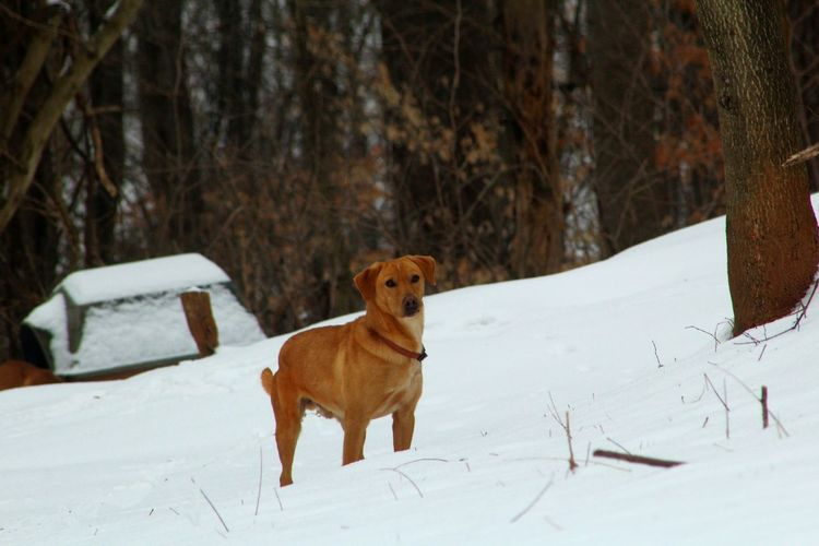 Portrait Of Brown Dog On Snowcapped Mountain