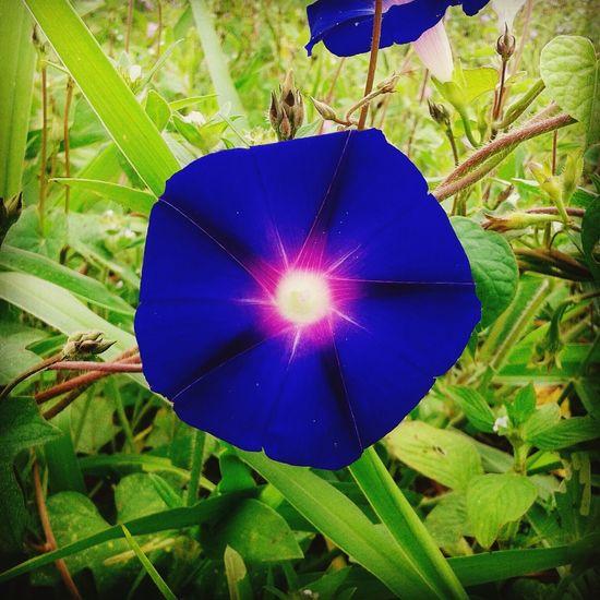 Samsung Galaxy S3 Hi! Hello World Paraguaçu MG Jonas Rezende Brasil Flora Flores Nature