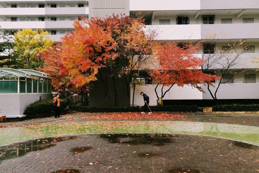autumn mood Autumn Building Exterior Day