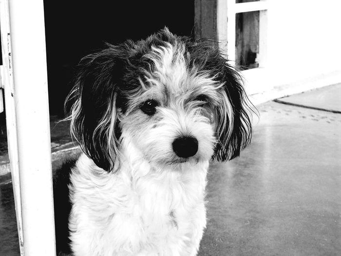 Sasha❤ Dog Pets