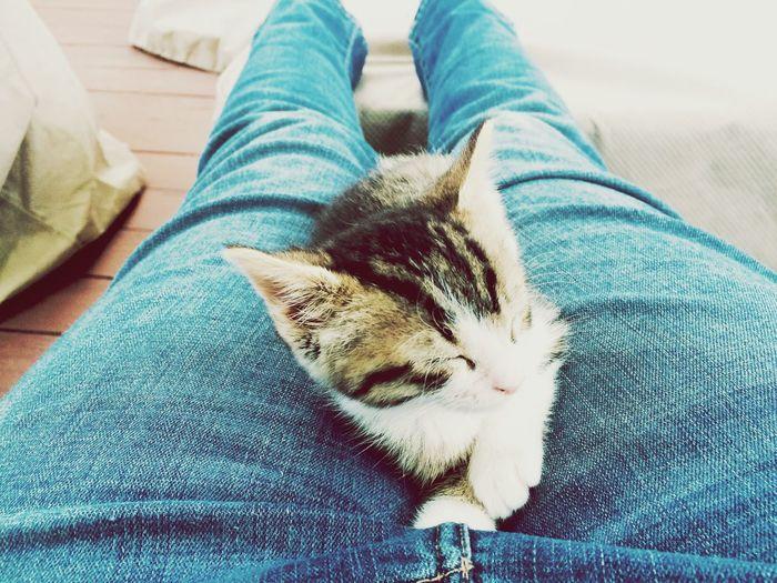 Little gift💎💕 Cute Animals Cat Kitten