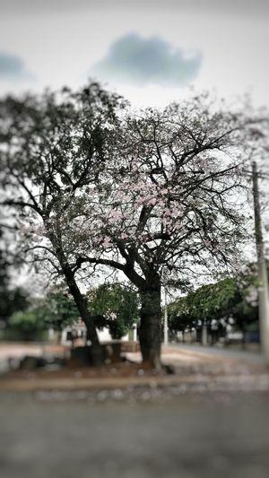 árvores, Natureza, Paisagens Naturais, Primavera