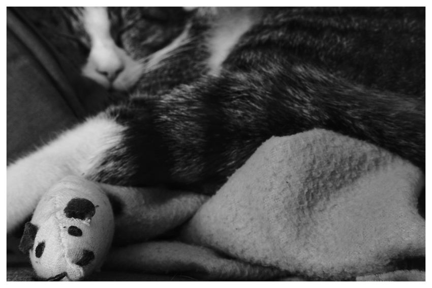 """""""Favorite mouse toy"""" Blackandwhite Blackandwhite Photography Blackandwhitephotography Black And White Black And White Photography EyeEm Best Shots - Black + White Animals Pets Pets Relaxation Close-up Cat Stray Animal At Home Domestic Cat Whisker Sleeping"""