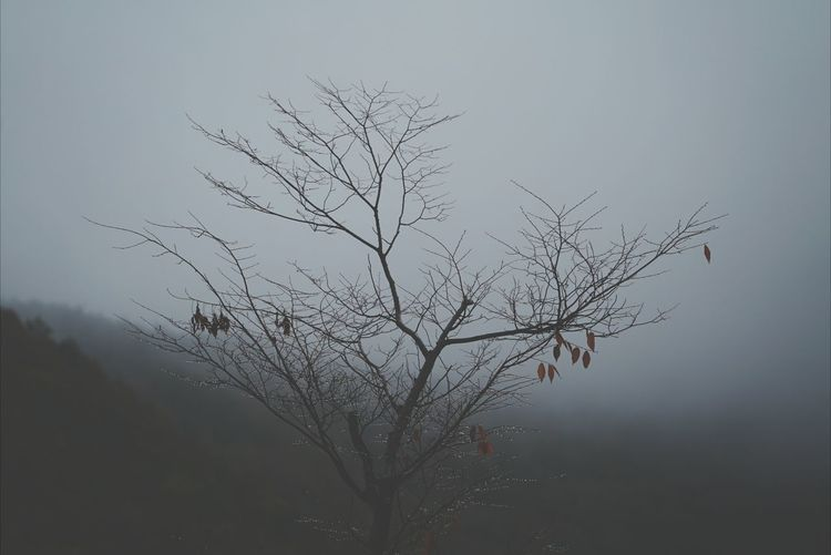 Korea Photos Tree TreePorn Silhouette Nature Treepark Fall Beauty Deceptively Simple