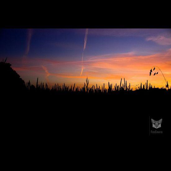 Sunset over the Cornfield Cornfield Sunset Sundown Fotografie Salzgitter Deutschland Getreidefeld Sonnenuntergang Natur Naturephotography