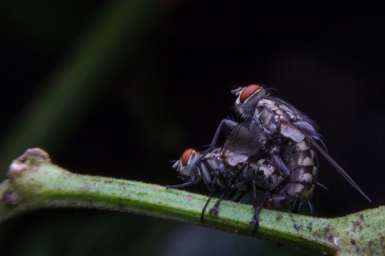Fly Animal Animal Body Part Animal Themes Animal Wildlife Animals In The Wild Close-up Green Color Nature Outdoors Selective Focus Vertebrate