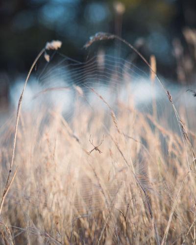 Spider on web on grassy field